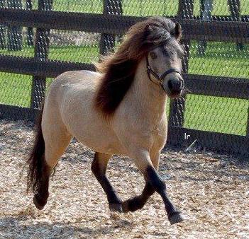 Как лошади занимаются сексом