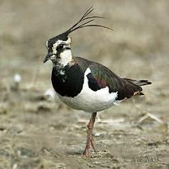 хищных птиц, птицы с хохолком фото и птенцы жако ростовская область.