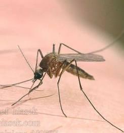 ...43 24-05-2012 Тема: Re: Караул,покусали.  Если укусил комар ребёнка?