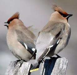 Фотография вы можете найти в каталоге: виды птицы.
