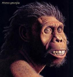 Эта картинка дает общее представление о времени существования ископаемых предков человека и их предполагаемых.