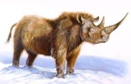 Шерстистый носорог. Мамонтова фауна. Шерстистый носорог. Бизон ...