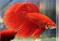Дом и быт - Животные, растения - Рыбки.